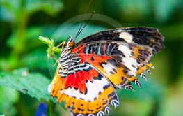 Close-up of butterfly sitting on green leaf