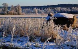 Frostigt landskap  (Sweden)