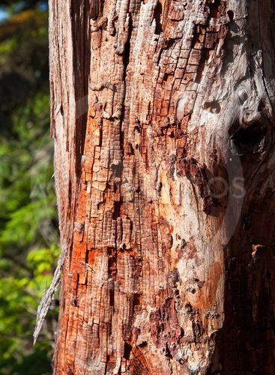 Decomposing Tree