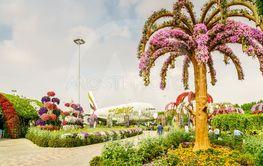 Dubai Miiracle Garden