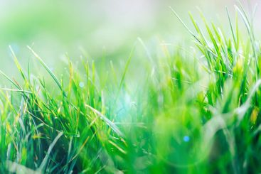 Abstract fresh natural background of green grass and...