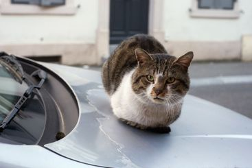 cat lying on car in the street
