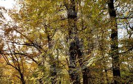 Beautiful lightning in trees in fall time