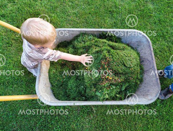 toddler flattens freshly cut grass in wheelbarrow by his...