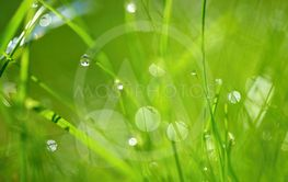 Green nature. Beautiful close up photo of nature. Green...