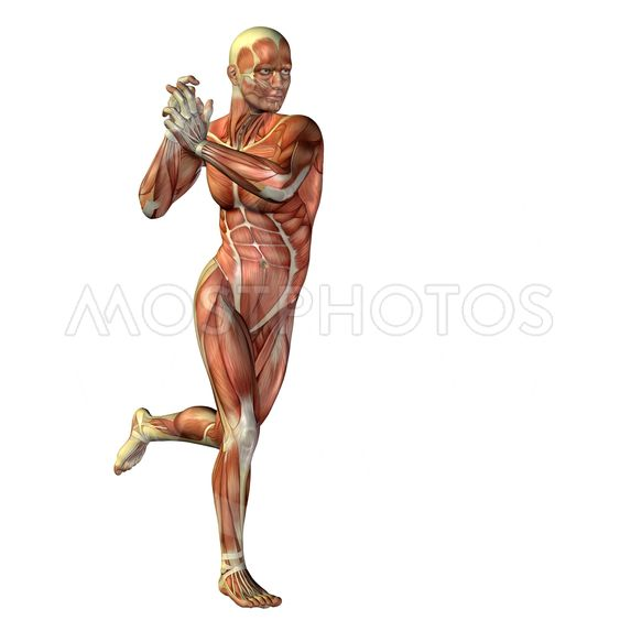 3D human or man with muscles for anatomy or sport...