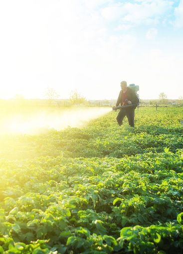 Farmer spray crops with pesticides. The use of chemicals...
