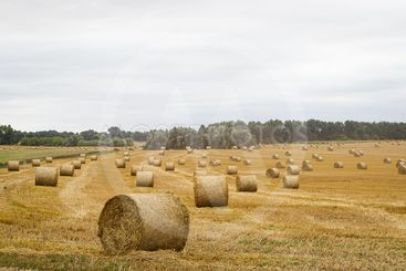 Hay roll in the meadow against a cloudy sky on a long focus