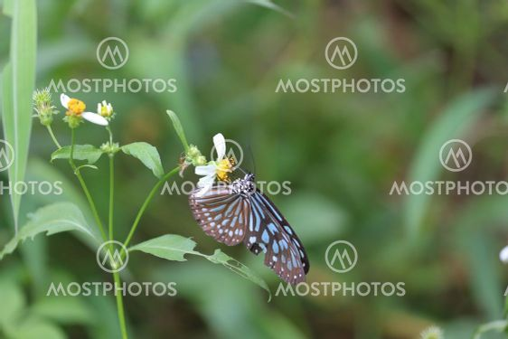 a Butterfly On A Flower, nature back ground
