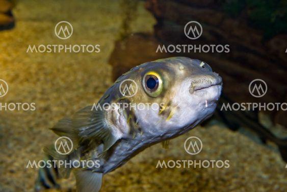 söt liten fisk