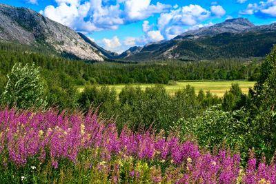 Norwegian mountains in summer