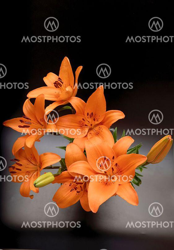 Lilium lancifolium, a bouquet of flowers in orange