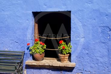 Red flowers on blue wall