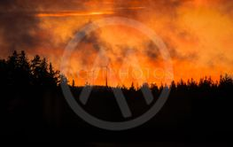 Forest fire in night time