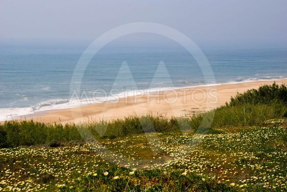 Ocean i foråret, Nazare, Portugal