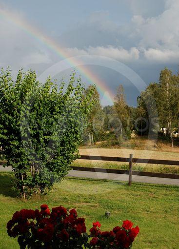 Regnbåge, sol och rosor  (Sweden)