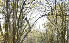 Träbro med räcke vid en strövstig i höstfärger