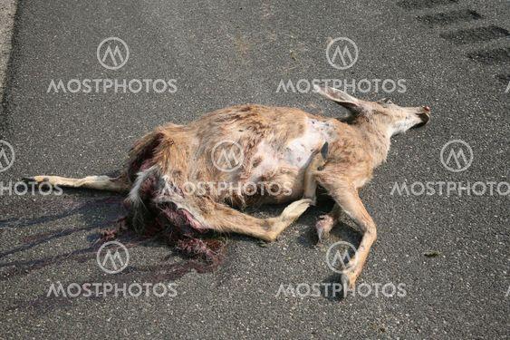 Hirvieläimet kuolleet 6
