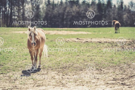 portrait of a horse on a pasture in nature