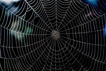 Dagg på stort blankt spindelnät i naturen.