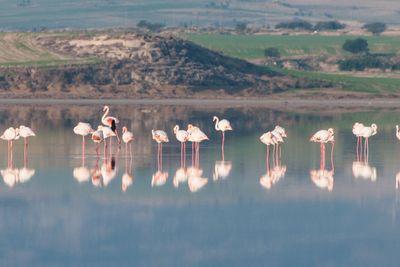 Group of beautiful flamingo birds