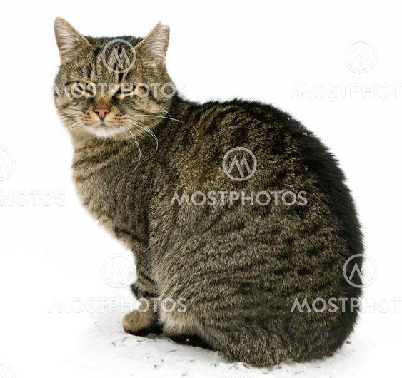 Kat sidder isoleret på hvid