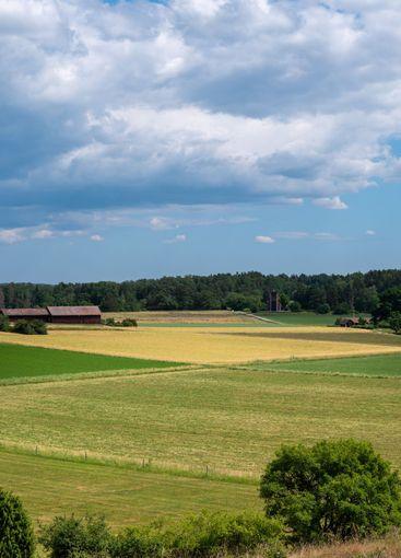 Fields and grass rural landscape.