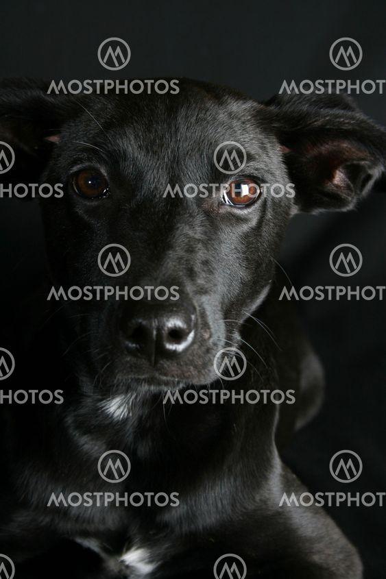 Blandade Breed Puppy