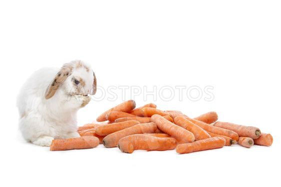 rabbit eating carrots