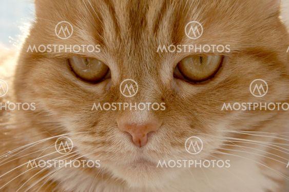 katt med röda ögon