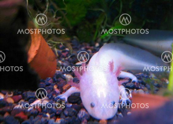 Valkoinen kala jalat