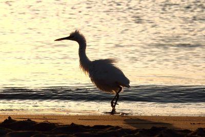 fun disheveled heron bird