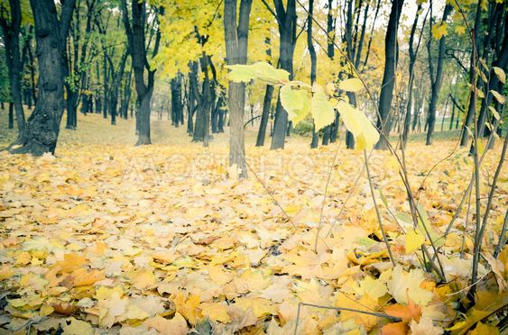 Beautiful natural autumn tree background.retro