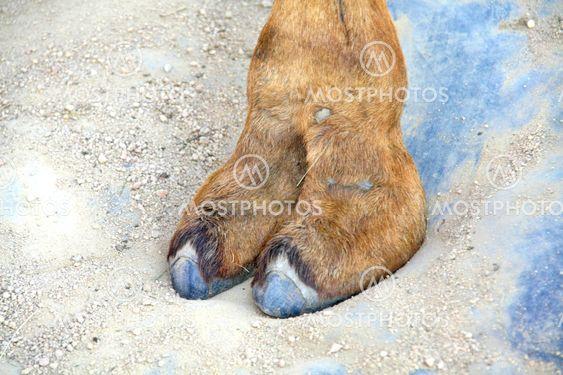 Camel-toe Top 27