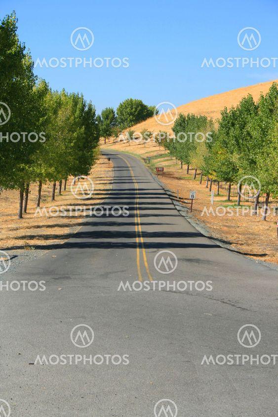 Road puistossa