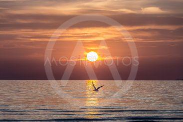 Solnedgång med mås