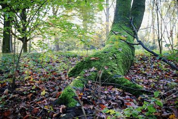 Mossy trunk in forest at autumn