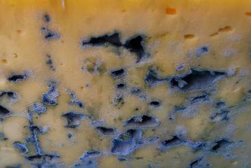 Closeup of moldy cheese texture