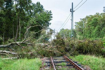 Träd ligger över ett järnvägsspår