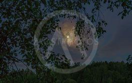 måne genom björk