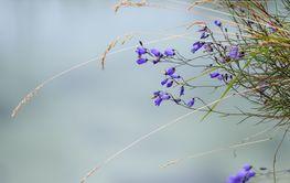 Flowers bells field