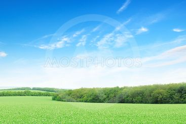 flowering field and a bright blue sky...