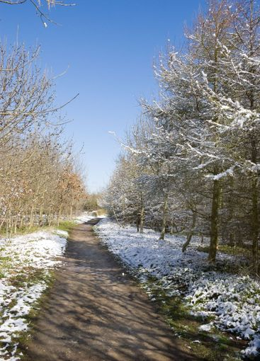 Footpath through snow covered trees