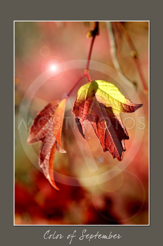 Farve af September