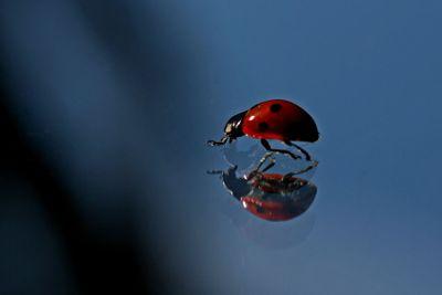 Ladybug_72