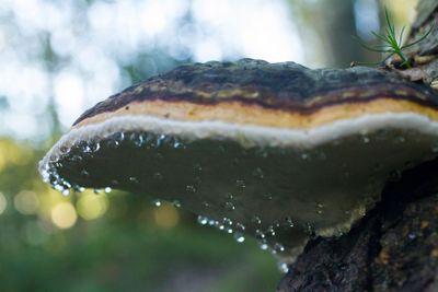 Fungus On A Fallen Tree