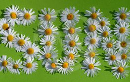 Sun in text with the flower daisy