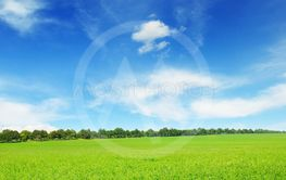 Fresh spring clover field