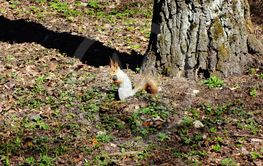 Squirrel in spring