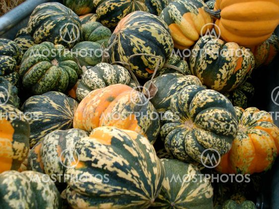Fall Gourds